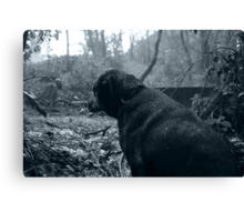 Sorry Looking Lurcher Canvas Print