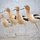 Avocet Bird Portrait by Oldetimemercan
