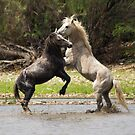 The Stallions by Saija  Lehtonen