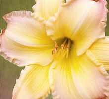 Big Yellow with the Pink Fringe  by Kathilee