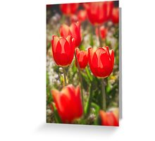 Red Tulips In The Sun Greeting Card