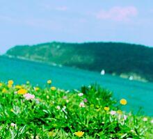 Summer Daydream by Amber Elen-Forbat