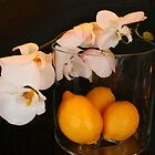 Still Life In Paris .. Orchids & Lemons by Michael Matthews