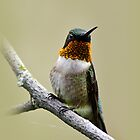 Ruby-Throated Hummingbird by Christina Rollo