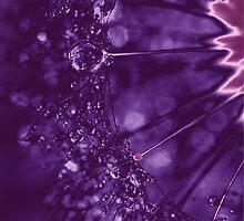 Rain drops(purple) by artemisd