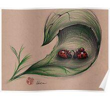 The Ladybug Family Poster