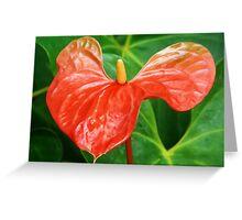 ANTHURIUM FLOWER CAPTURE Greeting Card