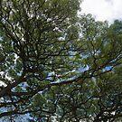 The Intricate Natural Canopy by Georgia Mizuleva