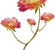 FLOWERS by Maria Mazhirina