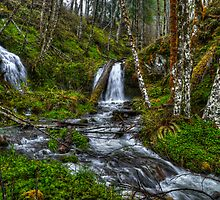 The Many Colors of Green by Charles & Patricia   Harkins ~ Picture Oregon