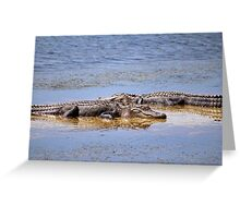 Gators Napping Greeting Card
