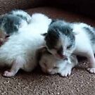 4 Little Kittens  5 days old by MaeBelle