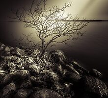 The burning bush by HappyMelvin