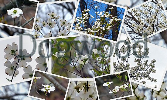 Dogwood Collage by Susan S. Kline