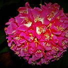 Pink Ball Hydrangea Multiproduct by ♥⊱ B. Randi Bailey
