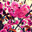 Blossoms on Madison Avenue by ShellyKay