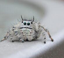 I am watching you! by Sheryl Hopkins