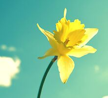 Daffodil by RDeleanDesign