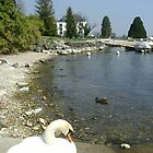 LAKE GENEVA, NYON SWITZERLAND by Marilyn Grimble
