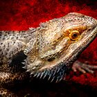 Pogona by Thomas Gehrke