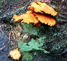 Humungous Fungus by Asoka