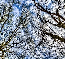 Into The Trees by DavidHornchurch
