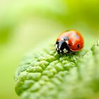 ladybug red green by drdoc2000