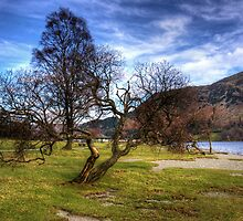 Gnarled Tree at Glenridding by Tom Gomez