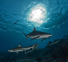 Sharks in the Sun by Valerija S.  Vlasov