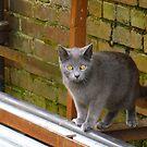 Cat In The Alley by WildestArt