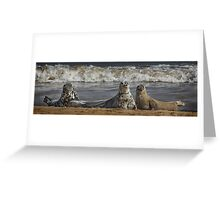 Three Atlantic Grey Seals Greeting Card