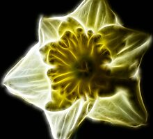 Daffodil by fractacular