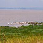 Lake Manyara Landscape by Valerija S.  Vlasov
