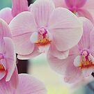 Pretty Elegance. Orchids from Keukenhof. Netherlands  by JennyRainbow