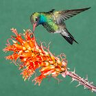 Broadbill and Ocotillo by Linda Sparks