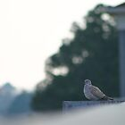 Mourning Dove by Hayley R. Howard