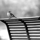 Bench Bird by Hayley R. Howard