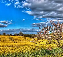Spring fields near Hook Norton by vivsworld