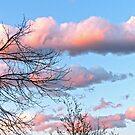 Early Evening Sky by Susan S. Kline