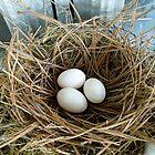 Parasitic Egg by WildestArt