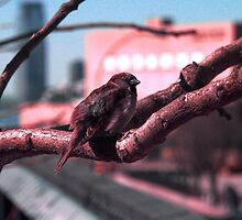 Sparrow on The High Line by Amanda Vontobel Photography