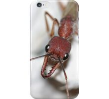 Ant iPhone Case/Skin