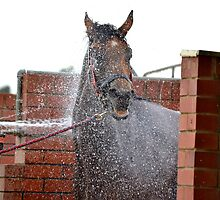 Splash by SouthcombeFH