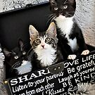 Kittens in a box by Coralie Plozza