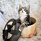 Gift of a kitten by Coralie Plozza
