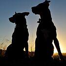 Rescue dogs rock by Coralie Plozza