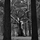 Scary Trees- Kuitpo Forest by Ben Loveday
