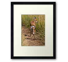 Steenbock Framed Print