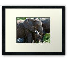 Mudephant Framed Print