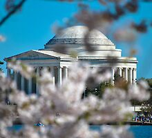 Cherry Blossom at Thomas Jefferson Memorial by Gustavo Bernal